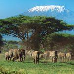 Оформляем визу в Танзанию быстро и без проволочек