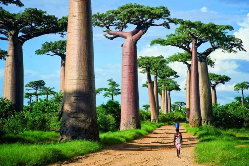 Виза в Мадагаскар для россиян: способы оформления